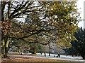 ST3087 : A winter walk in Belle Vue Park by Robin Drayton