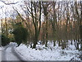 TQ4558 : Burlings Lane beside Bastion Wood by David Anstiss