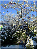 NS4865 : Winter Flowering Cherry tree at Glasgow Airport by Thomas Nugent