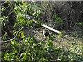 SJ2307 : Beside Lledan Brook by Penny Mayes