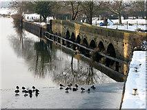 SK7953 : Newark: ducks on the ice at Longstone Bridge by John Sutton
