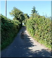 ST3694 : Narrow hedged road climbs towards Croesllywarch House by Jaggery