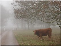 SJ5409 : Misty moo by Ian Paterson