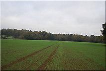 TQ5334 : Holden Wood beyond Winter Wheat by N Chadwick