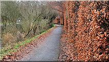 J3269 : Hedge, Lagan towpath, Belfast by Albert Bridge