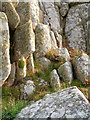 SV8707 : Carn on Carnew Point by David Lally