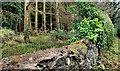 J3369 : Wall, Belvoir forest, Belfast by Albert Bridge