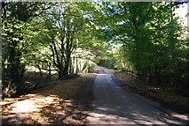 TQ8224 : Ewhurst Lane to Northiam by N Chadwick