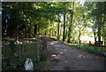 TQ8224 : Sussex Border Path off Ewhurst Lane by N Chadwick