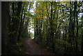 TQ6932 : Sussex Border Path, Hollow Wood by N Chadwick