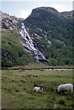 NN1868 : Sheep grazing at Steall by Russel Wills