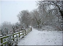 SO8171 : Leapgate Country Park in snow by P L Chadwick