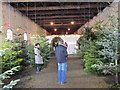 NZ1222 : Christmas tree sales in Raby Castle riding school by David Hawgood