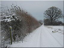 TR2655 : Footpath junction on the bridleway near Crixhall Court by David Anstiss