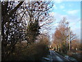 TF5418 : Trees, Bullock Road, Hay Green, Norfolk by Richard Humphrey