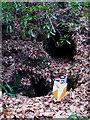 SW6443 : An old mine working in Oak Wood by Rod Allday