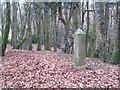 SW6443 : A boundary stone in Tehidy Woods by Rod Allday