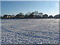 SP3079 : Seagulls in the snow by E Gammie