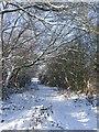 SJ9302 : Grassy Lane in the snow by John M