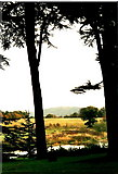 SJ5509 : River Tern at Attingham Park, Shropshire by nick macneill