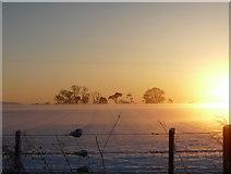NH8480 : Winter solstice sunset near Rhynie by sylvia duckworth