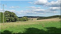 NZ0255 : Parkland near Kiln Pit Hill by Stephen Richards