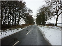 SE9746 : A minor road to Lockington by Ian S