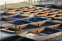 TL4458 : Pattern of punts by Alan Murray-Rust