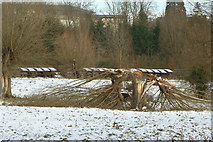 TL4457 : Broken willow by Alan Murray-Rust