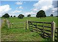 NZ1185 : Parkland near Meldon by Stephen Richards