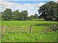 SO6286 : Meadow at Cleobury North by Trevor Rickard
