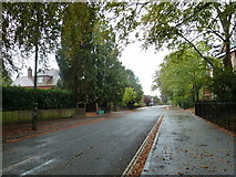 SU6351 : Looking south-west down an autumnal Cliddesden  Road by Basher Eyre