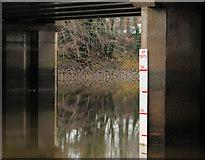 J3371 : Height marker, River Lagan, Belfast (2) by Albert Bridge