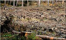 J3630 : Felled area, Donard forest, Newcastle (1) by Albert Bridge