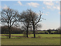 TL5060 : East from Low Fen Drove Way by John Sutton