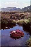 NN7954 : Heather island by Russel Wills