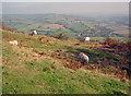 SO3223 : Pentwyn Hill Fort by Trevor Rickard