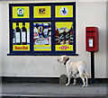 TF3311 : Waiting patiently by Gedney Hill shop and Post Office by Evelyn Simak