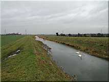 TF6213 : Swans on the River Nar near Setchey by Adrian S Pye