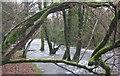 SH5059 : Coed ar lan Afon Gwyrfai 2 / Trees on the banks of Afon Gwyrfai 2 by Ceri Thomas
