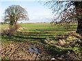 TG3606 : Field boundary by Wood Lane Farm, South Burlingham by Evelyn Simak