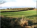 TG3705 : Undulating farmland by Hassingham by Evelyn Simak