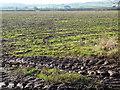 ST4591 : Winter field, near Llanfair Discoed by Ruth Sharville