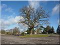 SU3814 : Former Ordnance Survey HQ, Maybush, Southampton, Tree by Alexander P Kapp