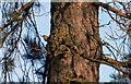 SE3103 : Spot the Nuthatch by Steve  Fareham