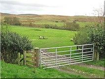 NX6060 : A gate into a field by Ann Cook