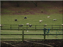 TL0637 : Grazing Animals by Dennis simpson