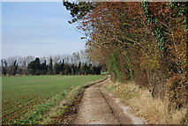 TQ8554 : North Downs Way by N Chadwick