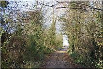 TQ8554 : Pilgrims' Way by N Chadwick