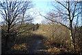 TQ5436 : Track in Broadwater Warren Nature Reserve by N Chadwick